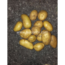 Fresh potato new season