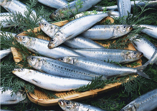 Whole Round Sea Frozen Sardine