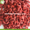 Factory Supply Fruits Nutrition Buy Goji Berry