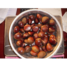 Dandong fresh chestnut for sale