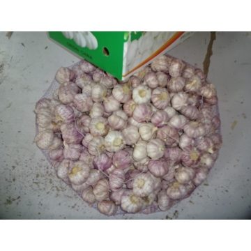 Hot Sale Fresh Garlic 2019