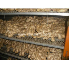 Air dried Ginger 300g and up