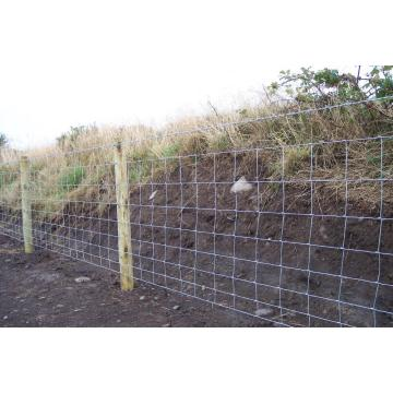 heavy galvanised hinge joint stock fencing filed fence