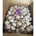 Factory Supply High Quality Fresh Natural Garlic