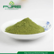 Organic Raw Moringa Powder/ Moringa leaf powder