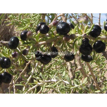 Wild Black Goji Berry with High Quality