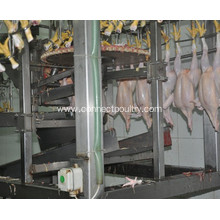 ODM for Chicken Plucker Chicken Feet Cutting Machine export to France Manufacturer