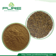 Herbal Extract cassia seed tea /cassia seed extract