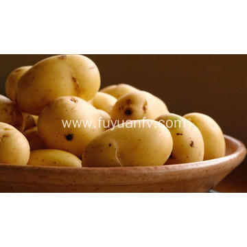 Fresh big potato direct supply wholesale
