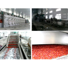 DWT Series Dehydration Vegetable Belt Dryer