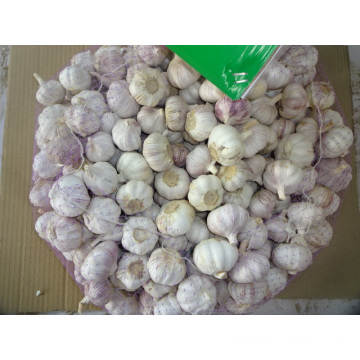 Size 5.0cm Regular White Garlic