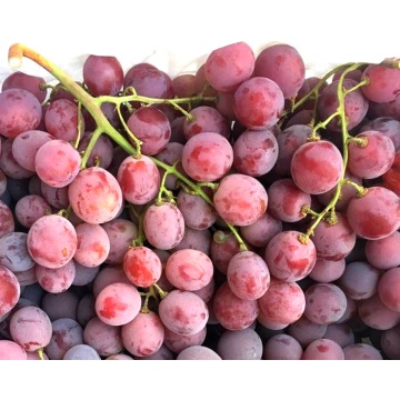 Fresh red globe grapes high quality for export