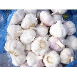 2018 new harvest normal white garlic