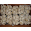 Pure White Garlic Packed In 500g bag