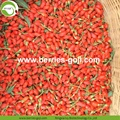 New Harvest Super Food Dried Raw Goji Berries