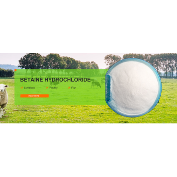 Methionine Substitution Betaine Hcl 97%
