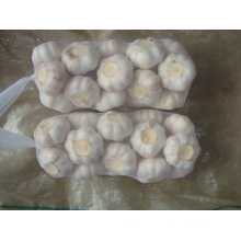 Normal White Garlic 4.5cm packing 1kg 10bags carton