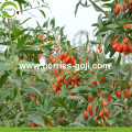 Factory Supply Healthy Dried Natural Goji