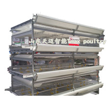 H Type Chicken Poultry Equipment