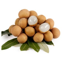 Chinese Fresh Longan Fruit