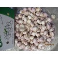 2019 Hot Sale Normal Garlic