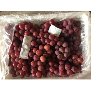 Export Standard Quality of Fresh Red Grape