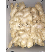 300g and up air dried ginger