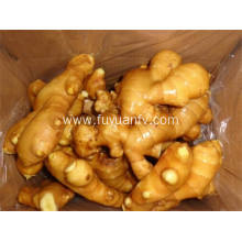 Top Quality Fresh Ginger Export Price