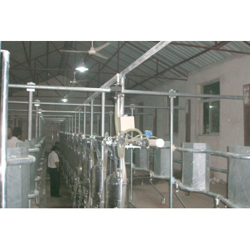 Dairy used middle set milking parlor