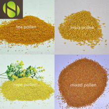 Good Quality for Bulk Bee Pollen wholesale natural mixed bee pollen bee bread export to United Arab Emirates Importers
