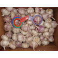 Fresh Normal White Garlic Of Top Quality