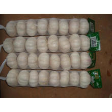 Big Size Normal Garlic15 16pcs bag10kg carton
