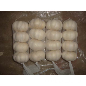 Pure White Garlic 4 pieces bag different sizes