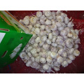 New Crop Normal White Garlic Export Standard