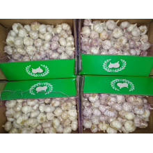 Normal White Garlic Fresh Crop 2019 Jinxiang