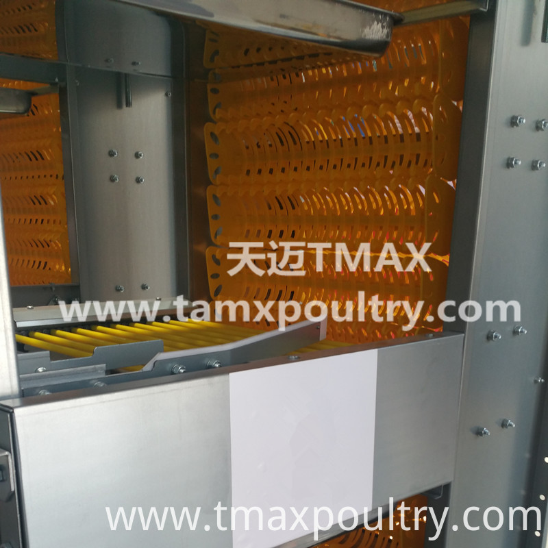 Automatic Egg Conveyor System