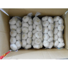Supply for Organic Fresh Garlic small mesh bag white garlic export to Sierra Leone Exporter