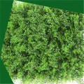 Assorted leaves artificial plant wall