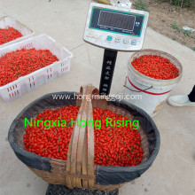Zhongning daodi Goji berry low pesticide
