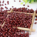 Adzuki Bean for Sale