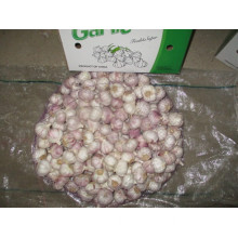 Normal Garlic Fresh Crop 2019