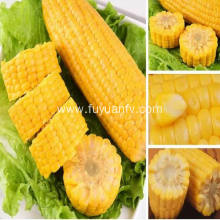 organic fresh sweet corn