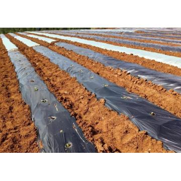 PE Mulch Film for Agriculture