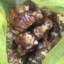 Good quality hot  sale taro for export