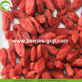 Natural Nutrition Dried Fruit Lycium Chinensis