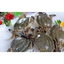 Top for Frozen Seafood Mix,Frozen Sardine Fish Meal Seafood Mix, Manufacturers and Suppliers in China Frozen Cooked Swimming Crab supply to Haiti Importers