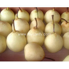 Yellow fresh Ya pear with good quality