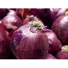 Fresh high quality onion
