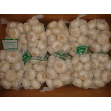 Size of 4.5cm Pure White Garlic