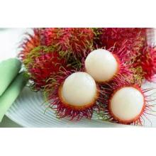 Chinese Rambutan Fruit Plant